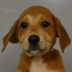 Kutyamenhely - állatmenhely - RescueDog
